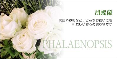 HANAYA|北九州・小倉北区霧ヶ丘・鍛冶町のお花屋さん 花束 PHALAENOPSIS